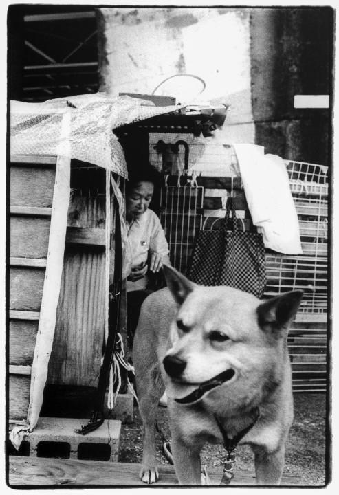 Photo issue du projet de George au Japon. / Japan project.